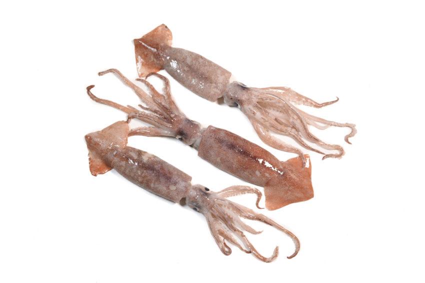 pescaderia online barcelona pescado fresco canana fresca gourmet