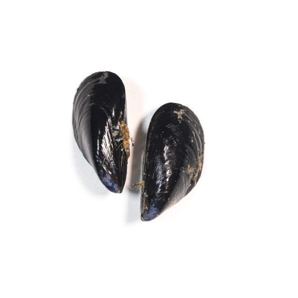 musclos-mejillones