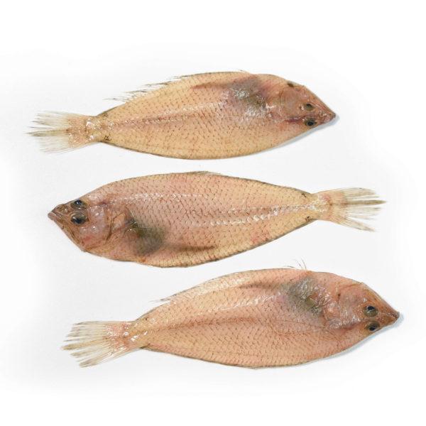 pelaia gallo peix blanc blanco marisco marisc peix pescado pescadores pescadors proximitat proximidad online casa domicilio temporada directo platjeta entrega fácil fácil fácil local slowfood