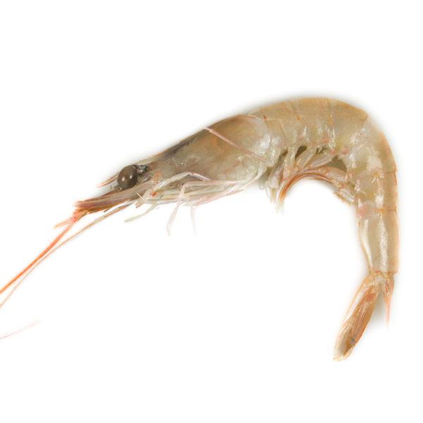 gamba blanca gamba de huelva temporada proximidad pescado peix marisc pescaderia online