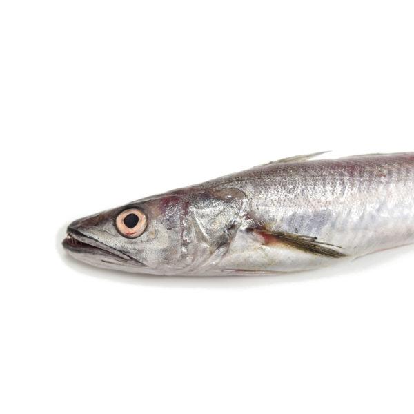 lluç merluza pescadilla pescado peix fresc fresco online lonja directo pescadores pescadors