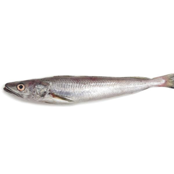 lluç merluza hake pescadilla peix pescado proximitat proximidad fresco facil online pescadores