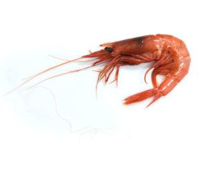gamba vermella paella mariscada proximitat temporada tradicio