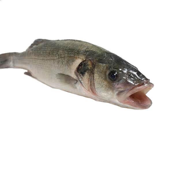pescaderia online pescado online lubina llobarro barcelona fresco en casa facil rapido
