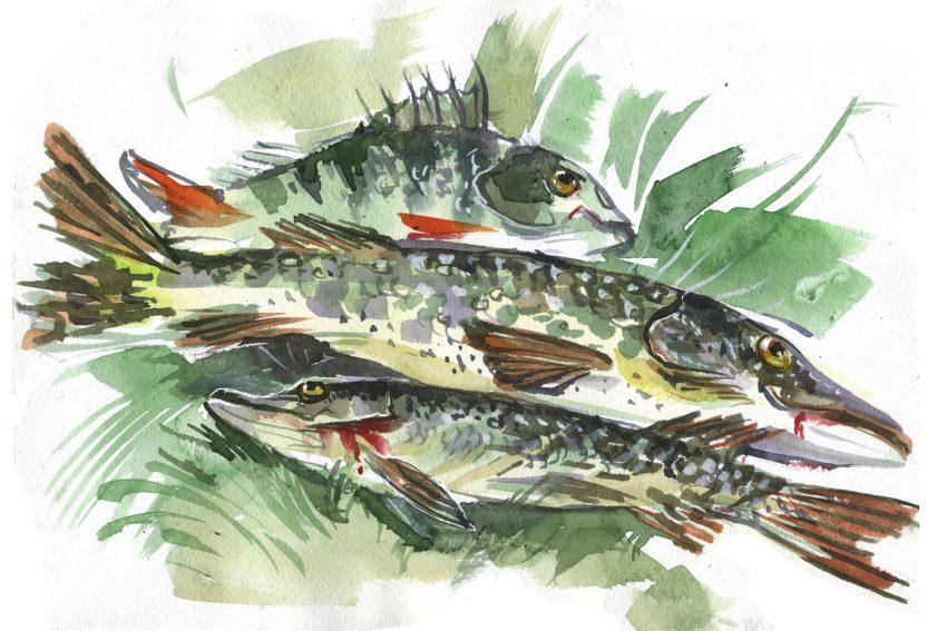fish-3219405_1920