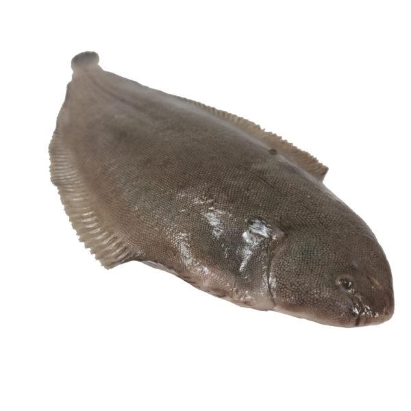 peix marisco marisc peix pescado pescadores pescadors proximitat proximidad online casa domicilio temporada directo platjeta entrega facil local slowfood