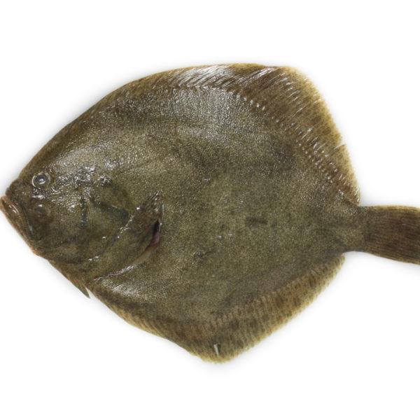 pescaderia online rodaballo peix pescado pescadores pescadors proximitat proximidad online casa domicilio temporada directo platjeta entrega facil local slowfood gourmet